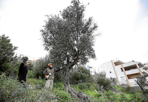 David Carbonell se desvincula del Made in Menorca cuarenta días después de pisar la Isla
