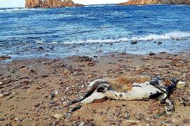 El control de los accesos a las playas arranca en pleno julio