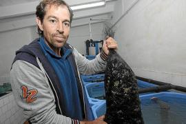 Es Castell reclama respeto a los equipos de EBA Balear