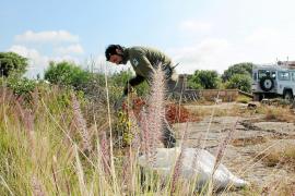 Medio Ambiente dice que el Consorcio «tiene la responsabilidad»