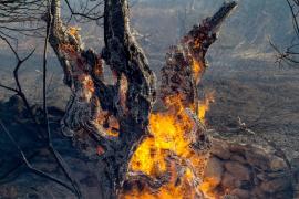 El belén gigante de Maó 'descansa' este año por el mal estado de las figuras