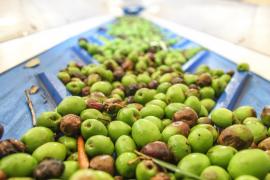 """Once restaurantes se suman a la iniciativa gastronómica """"Menorca en el plato"""""""