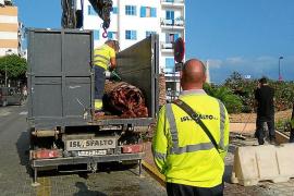 Eivissa gana el pulso por los 'gigantes' del mar