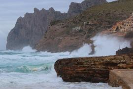"""Los analisis evidencian que la 'xylella' """"está ampliamente extendida"""" en Menorca"""