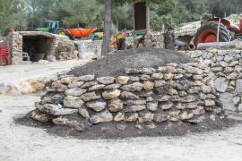 Retiran árboles dañados de Es Born para evitar accidentes