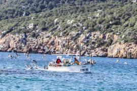 Alud de aspirantes para hacerse con las concesiones de playa de Ciutadella